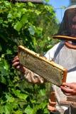 Capítulo con los panales con la miel en las manos del apicultor Imagen de archivo libre de regalías