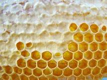 Capítulo con los panales de la abeja Fotografía de archivo libre de regalías