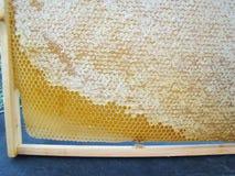 Capítulo con los panales de la abeja Imagenes de archivo