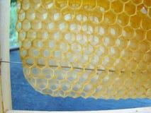 Capítulo con los panales de la abeja Foto de archivo