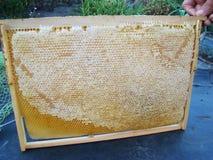 Capítulo con los panales de la abeja Foto de archivo libre de regalías