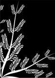 Capítulo con negro del helecho Fotos de archivo libres de regalías