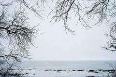 Capítulo de árboles Fotos de archivo libres de regalías