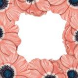 Capítulo de anémonas rosadas Fotografía de archivo libre de regalías