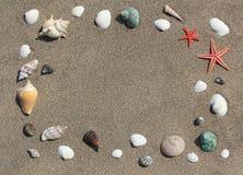 Capítulo de conchas de berberecho en la arena Imagen de archivo