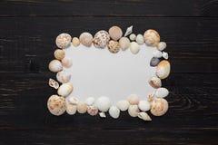 Capítulo de conchas marinas en fondo de madera Foto de archivo