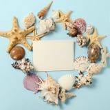 Capítulo de diversas conchas marinas de la abundancia en un fondo azul Contexto temático de la playa para la publicidad de la pla imagen de archivo libre de regalías