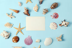 Capítulo de diversas conchas marinas de la abundancia en un fondo azul Contexto temático de la playa para la publicidad de la pla Imágenes de archivo libres de regalías