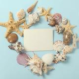 Capítulo de diversas conchas marinas de la abundancia en un fondo azul Contexto temático de la playa para la publicidad de la pla Fotos de archivo libres de regalías
