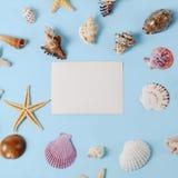 Capítulo de diversas conchas marinas de la abundancia en un fondo azul Contexto temático de la playa para la publicidad de la pla Fotografía de archivo