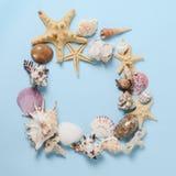 Capítulo de diversas conchas marinas de la abundancia en un fondo azul Contexto temático de la playa para la publicidad de la pla Foto de archivo libre de regalías