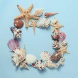 Capítulo de diversas conchas marinas de la abundancia en un fondo azul Contexto temático de la playa para la publicidad de la pla Fotos de archivo