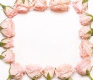 Capítulo de flores rosadas en el fondo blanco Imágenes de archivo libres de regalías