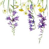 Capítulo de flores salvajes libre illustration