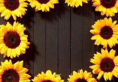 Capítulo de girasoles amarillos coloridos Foto de archivo