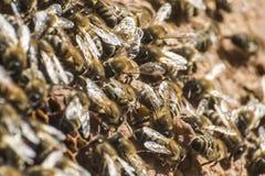 Capítulo de la cera de la colmena de la abeja de la miel que trabaja 2 Imagen de archivo libre de regalías