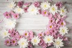 Capítulo de la flor blanca y rosada en la tabla de madera blanca Fotos de archivo