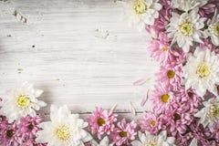 Capítulo de la flor blanca y rosada en la tabla de madera blanca horizontal Foto de archivo libre de regalías