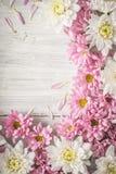 Capítulo de la flor blanca y rosada en la vertical de madera blanca de la tabla Foto de archivo libre de regalías