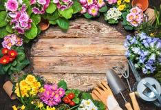 Capítulo de la flor de la primavera y de herramientas que cultivan un huerto Imagen de archivo