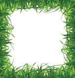 Capítulo de la hierba Fotografía de archivo libre de regalías