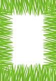 Capítulo de la hierba verde Ejemplo natural con el espacio para Imagen de archivo