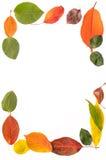 Capítulo de las hojas Fotografía de archivo