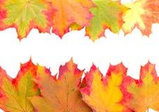 Capítulo de las hojas de arce del otoño Fotos de archivo