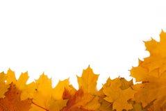 Capítulo de las hojas de otoño en un fondo blanco Imagen de archivo libre de regalías