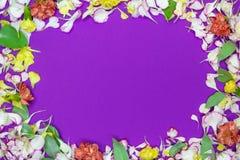 Capítulo de los pétalos y de los flores coloridos en el fondo violeta Endecha plana Visi?n superior imagen de archivo