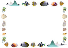 Capítulo de los pescados y de las cáscaras aislados en el fondo blanco Foto de archivo