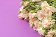 Capítulo de mini rosas hermosas beige en un fondo brillante de la lila holidays Lugar para el texto imagenes de archivo