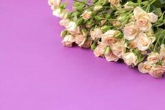 Capítulo de mini rosas hermosas beige en un fondo brillante de la lila holidays Lugar para el texto foto de archivo