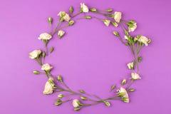Capítulo de mini rosas hermosas beige en un fondo púrpura brillante holidays Lugar para el texto Visión superior fotos de archivo libres de regalías