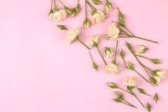 Capítulo de mini rosas hermosas beige en un fondo rosado brillante holidays Lugar para el texto Visión superior imagenes de archivo