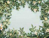 Capítulo de Perro-rosas con las flores blancas en azul claro Fotos de archivo