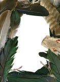 Capítulo de plumas del cuervo Foto de archivo