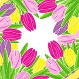 Capítulo de tulipanes florecientes con el espacio para el ejemplo del texto Imagen de archivo