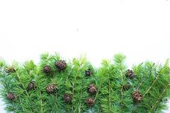 Capítulo, fondo con las ramas de árbol de navidad y conos Imagenes de archivo