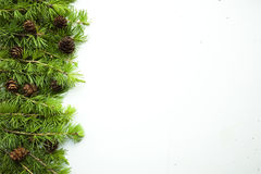 Capítulo, fondo con las ramas de árbol de navidad y conos Foto de archivo libre de regalías