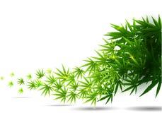 Capítulo formado con las hojas de la marijuana del cáñamo aisladas en blanco stock de ilustración