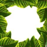 Capítulo hecho de hojas verdes fotos de archivo