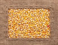 Capítulo hecho de la arpillera con maíz Imagenes de archivo