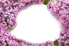 Capítulo hecho de lila floreciente hermosa en el fondo blanco foto de archivo
