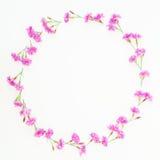 Capítulo la guirnalda hecha de flores rosadas en el fondo blanco Endecha plana, visión superior Modelo floral Imagenes de archivo