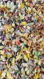 Capítulo llenado de colores tempranos del invierno Foto de archivo