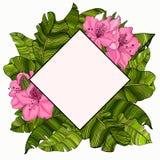 Capítulo para el texto en el diseño de las hojas multicoloras, verdes de un árbol de plátano y de las flores rosadas de la azalea fotografía de archivo libre de regalías