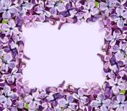 Capítulo para las imágenes con las flores de la lila Fotos de archivo