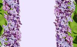 Capítulo para las imágenes con las flores de la lila Imágenes de archivo libres de regalías