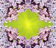 Capítulo para las imágenes con las flores de la lila Modelo natural Fotografía de archivo